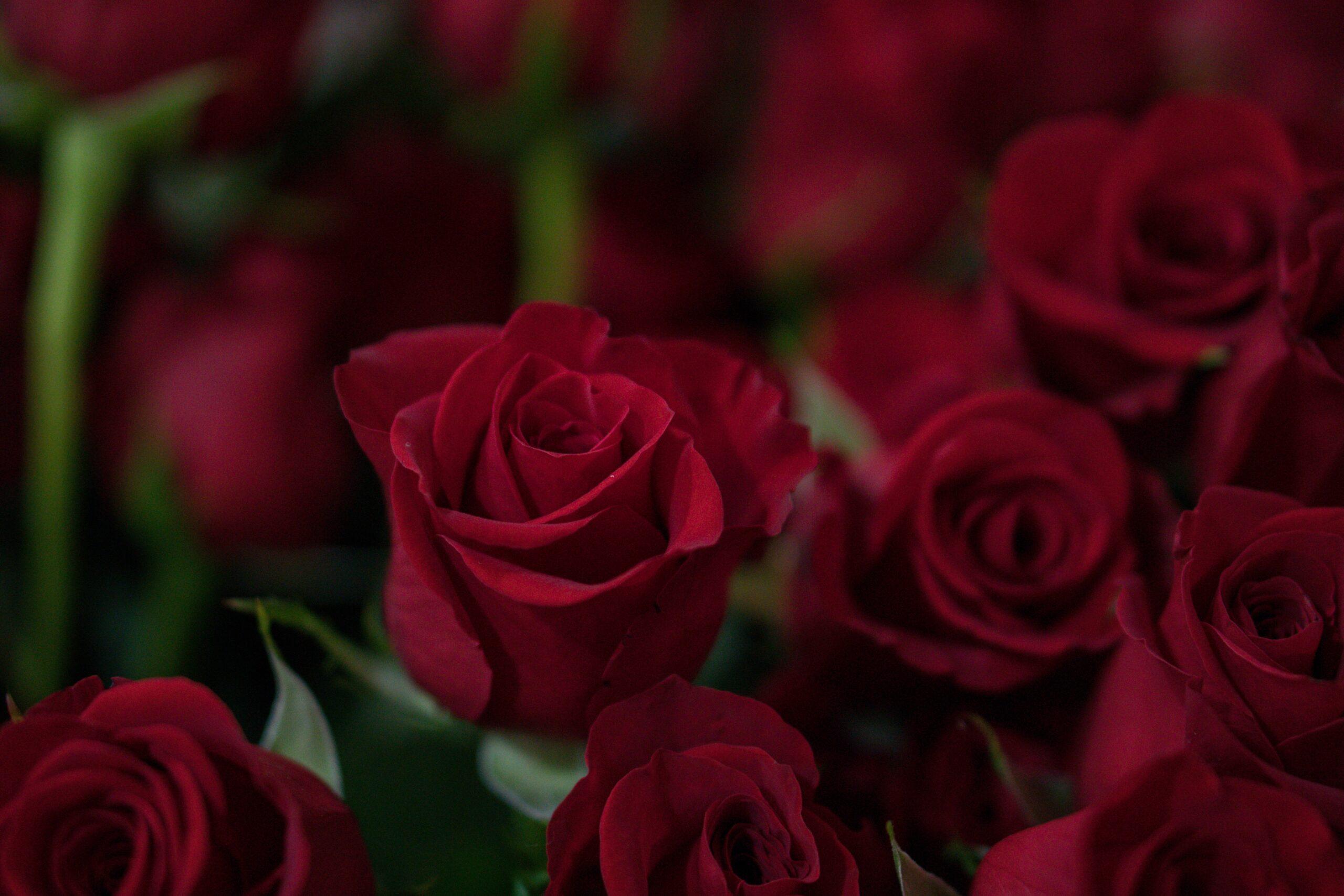 Rode rozen bestellen